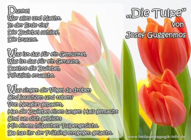 Die Tulpe Josef Guggenmos Gedichte Frühlingsgedicht