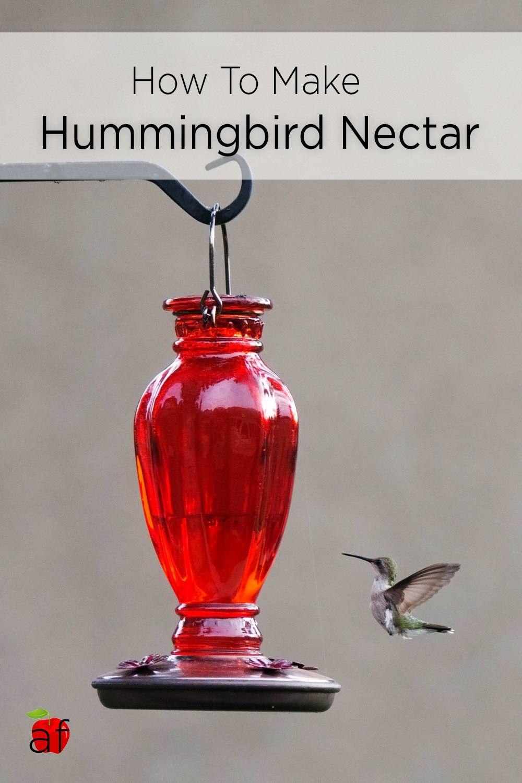 Diy This Easy Hummingbird Nectar Recipe Hummingbird Food
