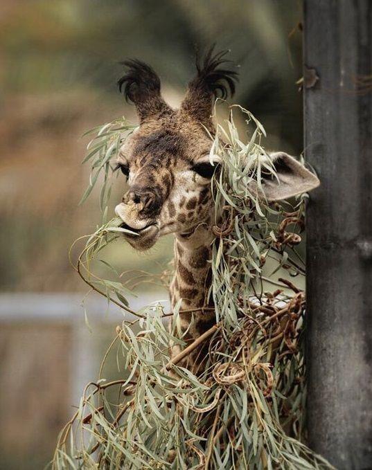 Etwas Verwirrt Tiere Wilde Tiere Tierbilder