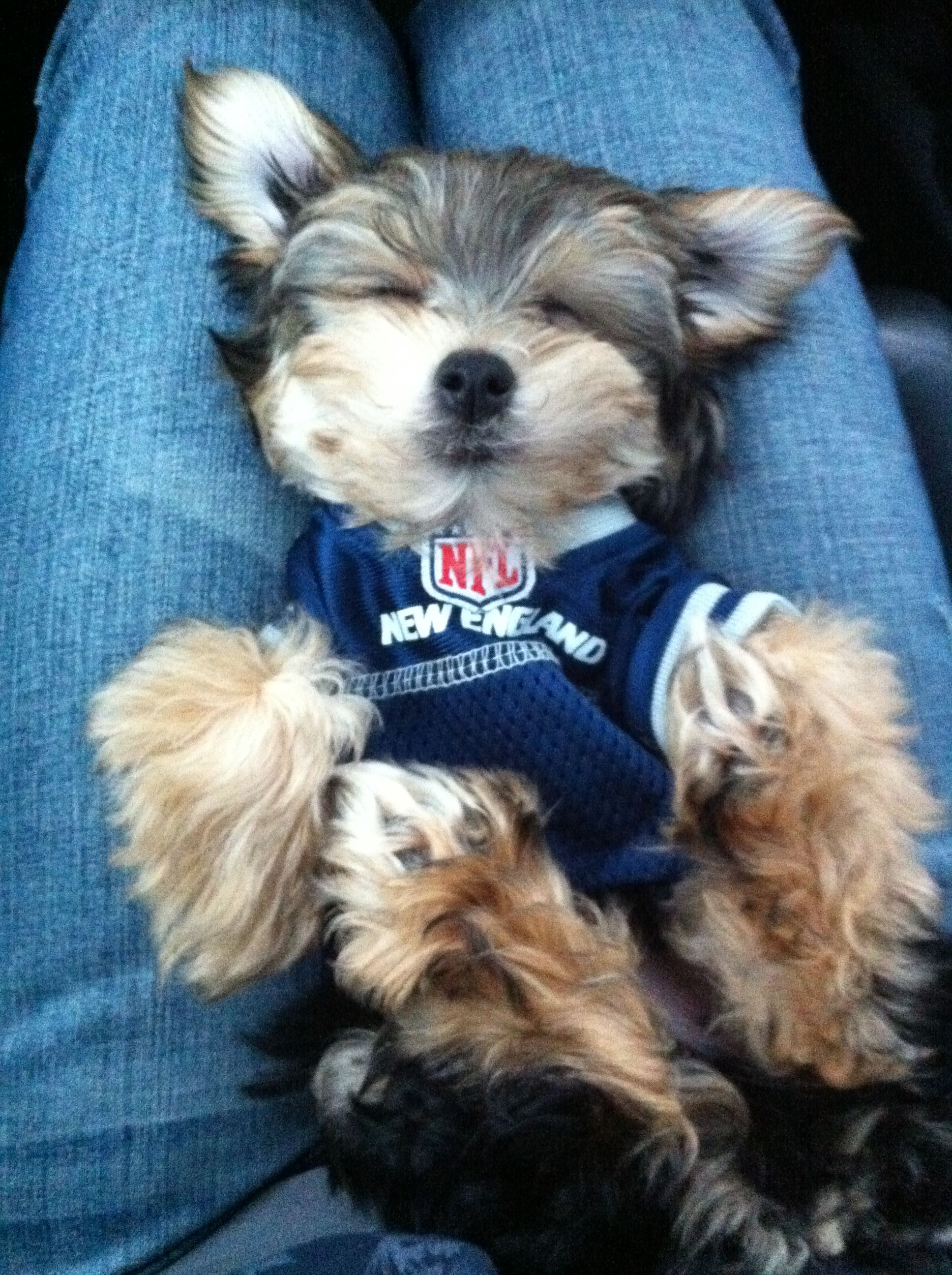 new styles 9c64b 19fc3 What could be cuter than a tiny puppy in a football jersey ...