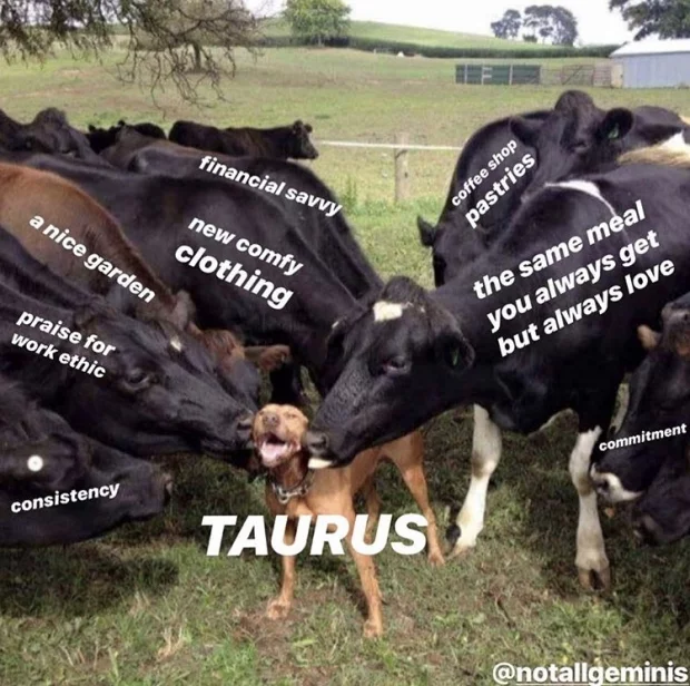 12 Astrology Memes That Made Us Feel Absolutely Attacked in 2019 | Her Campus