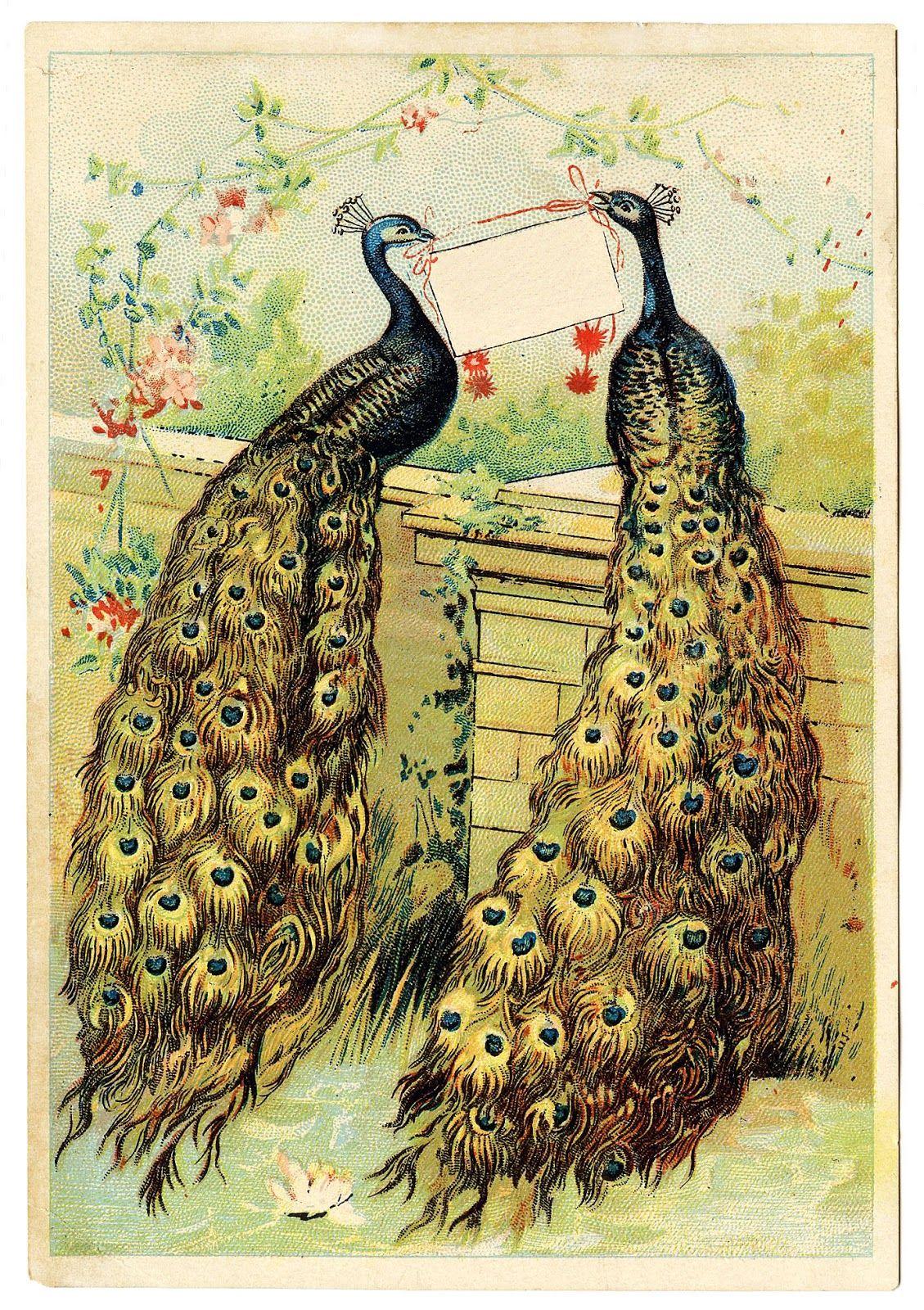 Лисы, старинные открытки с лебедями