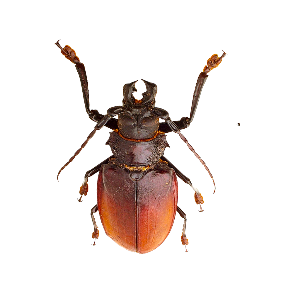 free download high quality small insects png image without