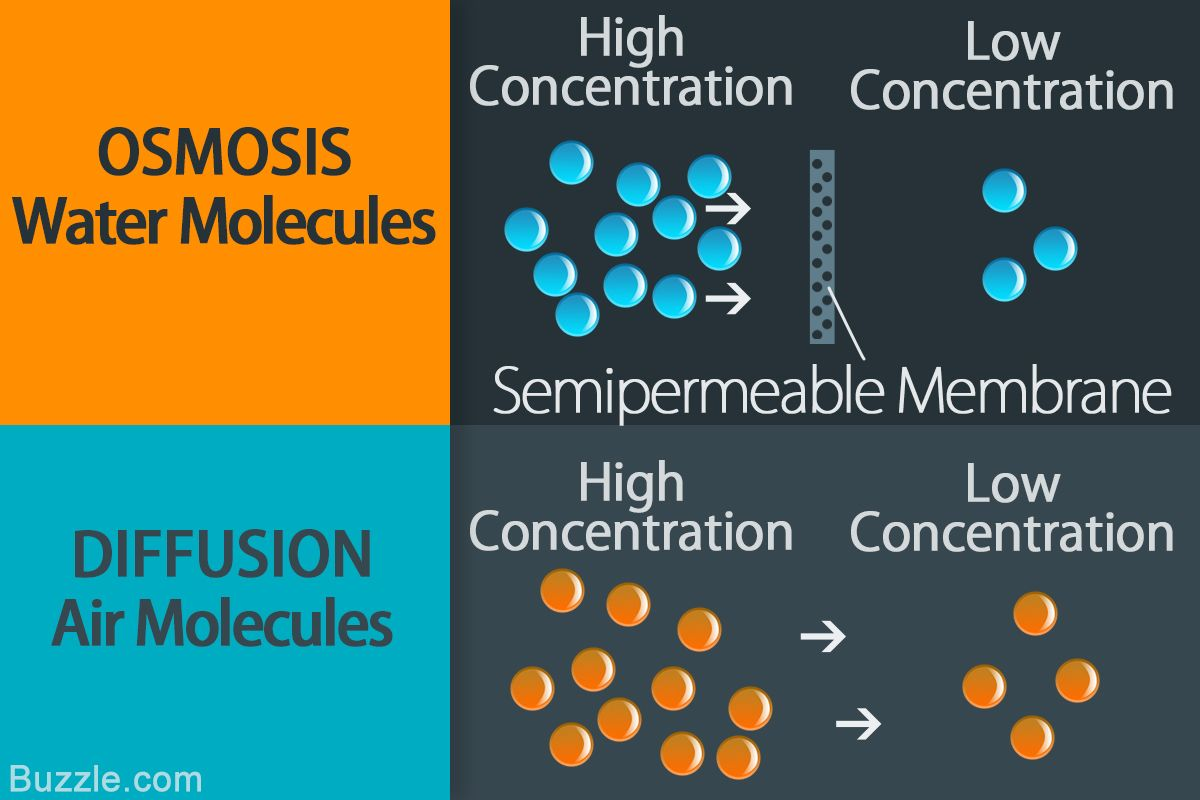 Osmosis Vs Diffusion How Are They Different From Each