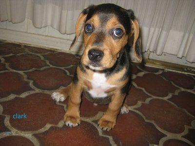Craigslist El Paso Tx Pets
