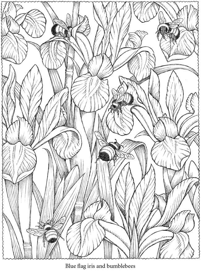 colouring in page sample from creative haven naturescapes coloring book via dover - Dover Coloring Books For Adults