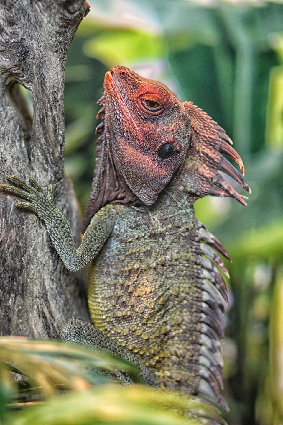 crested costa rican lizard see over 2500 more animal pictures on my facebook animals are. Black Bedroom Furniture Sets. Home Design Ideas