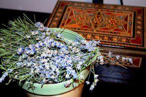 lavender stems