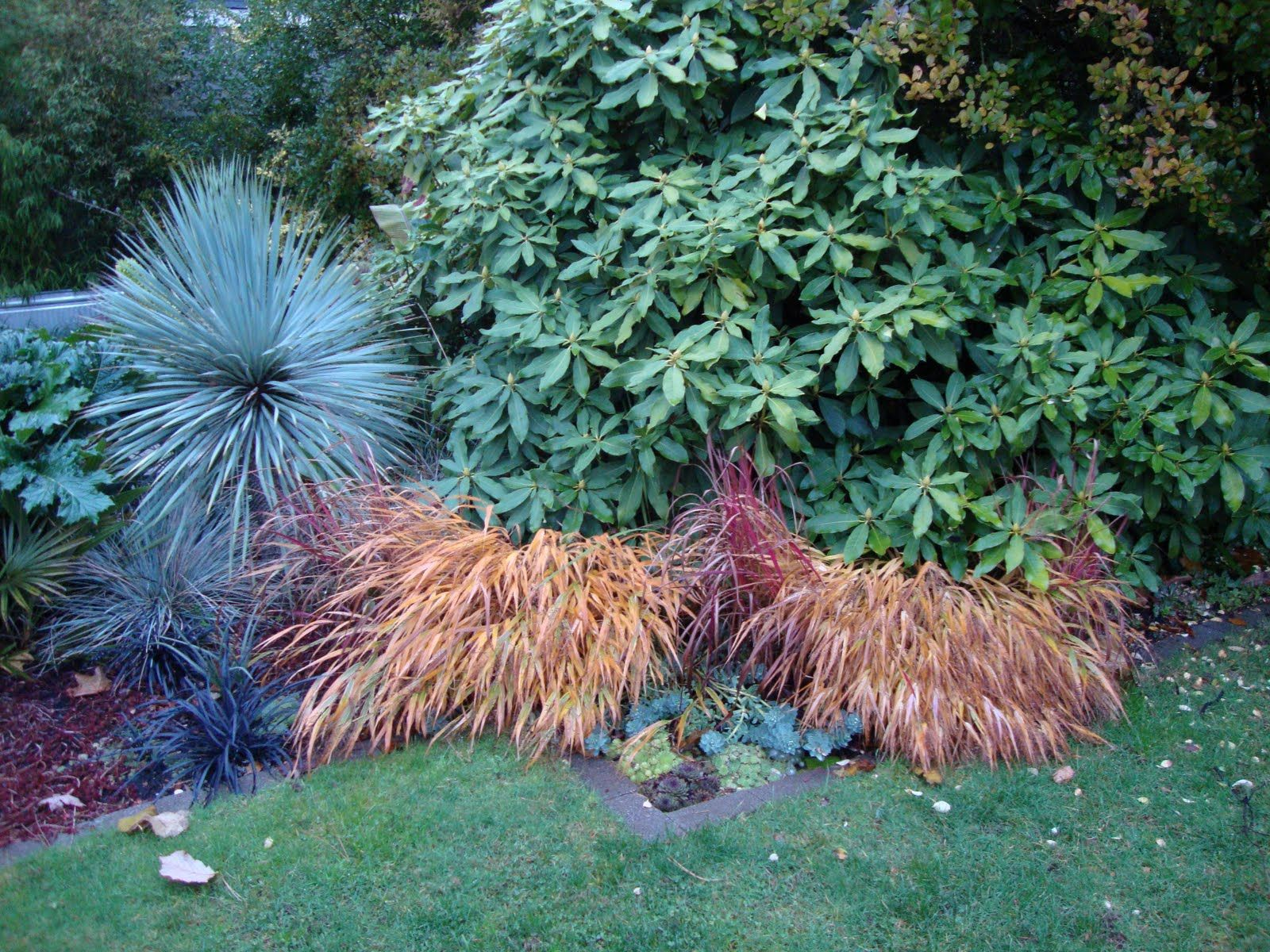 Pin By Tonya Broughton On My Landscape Ideas Shade Garden Plants