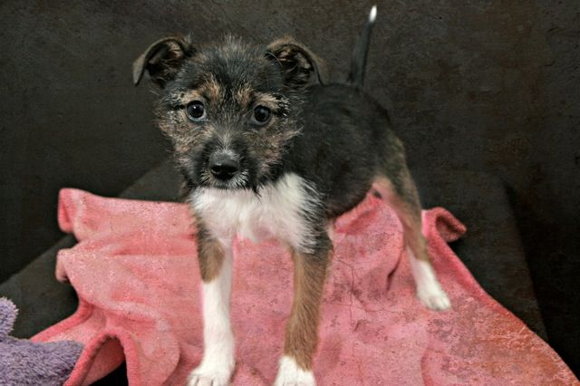 Adopt Mila On Adoptable Pets In The Dallas Ftworth Area