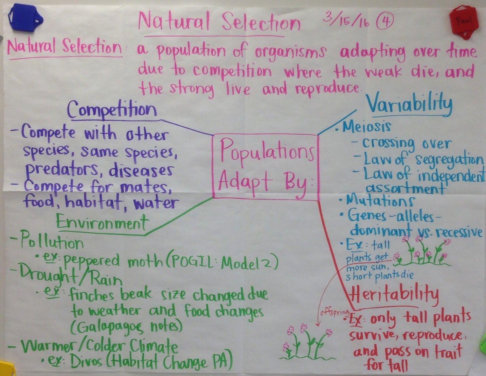 Biochemistry Final Review Sheet Properties Of Water Macromolecules Nitrogen Cycle Ecosystems