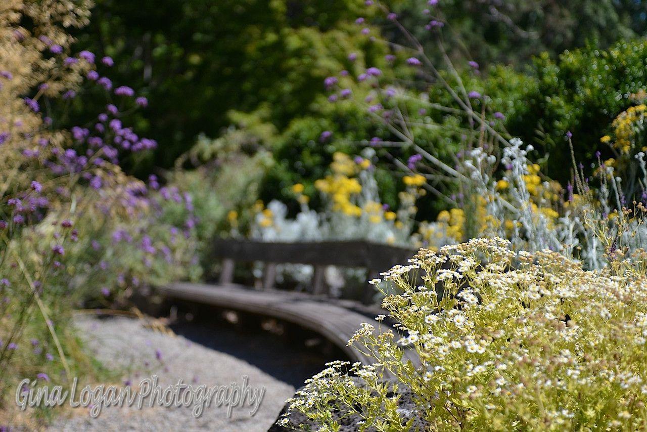 Pin by marin art garden center on magc fountain pond