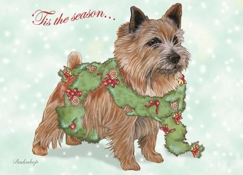 Norwich Terrier Christmas Card Norwich terrier, Pitbull