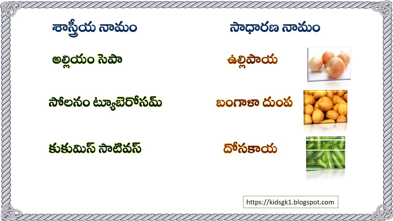 Common And Scientific Names Of Vegetables In Telugu General