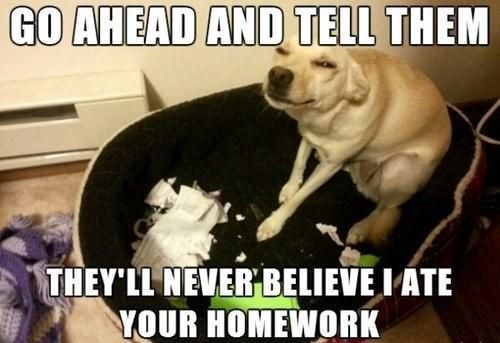 Dog Ate My Homework Meme Slapcaption Com Funny Captions Funny
