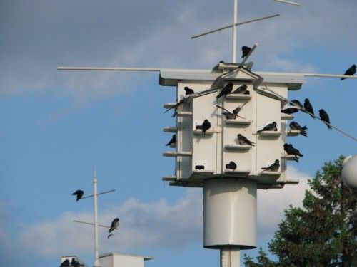 Purple Martin Houses And Complete Kits To Build Martin