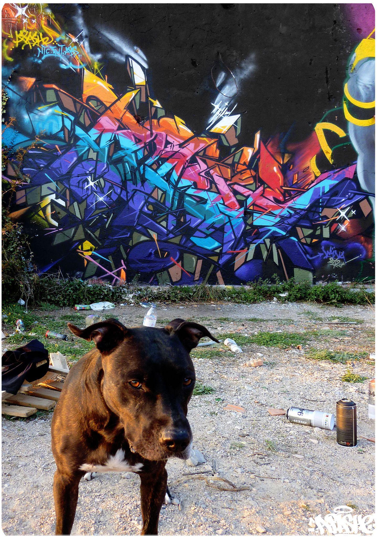 https://flic.kr/p/dcLySm   APASHE   MONACO 2012 #monacograffiti #graffiti #apashegraffiti #graff #apashe #sprayart #art #spraycan #spraycanart