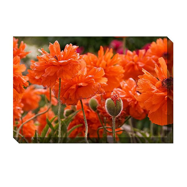 Dazzling Poppies Outdoor Canvas Art