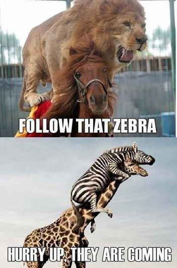 Some Things Just Don T Make Sense Lol Humor Funnypictures Funny Animal Photos Funny Animal Jokes Funny Animals