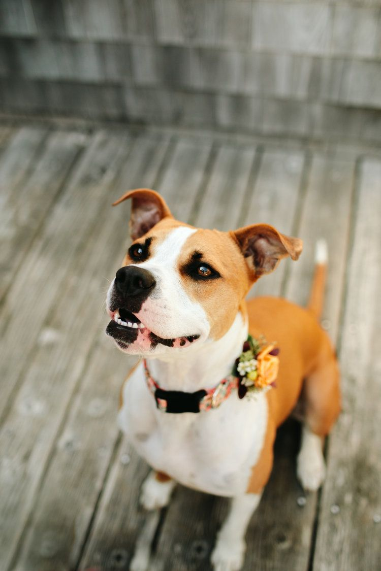 Nov 7 Amy Jon Georgetown Maine Wedding Maine Wedding Wedding Pets Barn Wedding