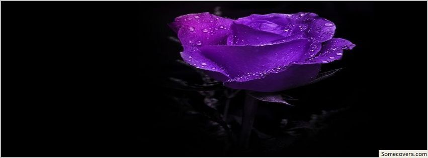 Facebook Sparkly Purple Roses Covers Love Tiny Purple Rose
