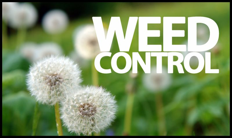Greenleaf Lawn Greenleaf Lawn is Tulsa's premier BBB A+ Rated Tulsa Lawn Care service. We specialize in Tulsa weed control & Tulsa Landscaping http://www.greenleafweedcontrol.com
