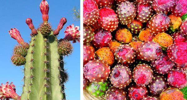 Pitayas Fruta Mexicana