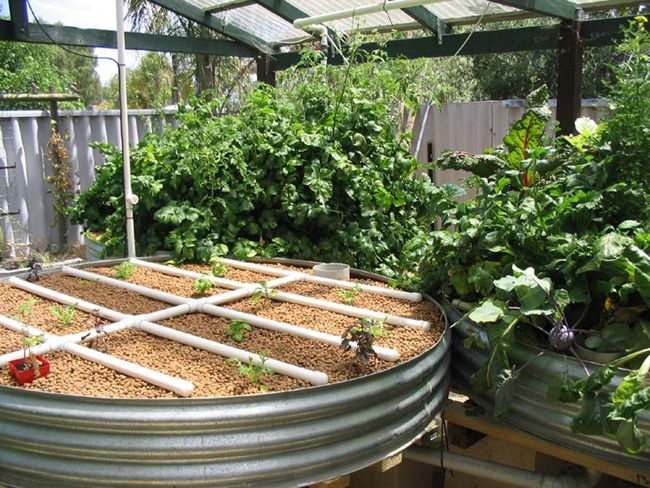 Aquaponics System Kerala Backyard Aquaponics Plans,aquaponics Market Home Aquaponics  Kit Australia,faq About Aquaponics Build Aquaponics Tank.