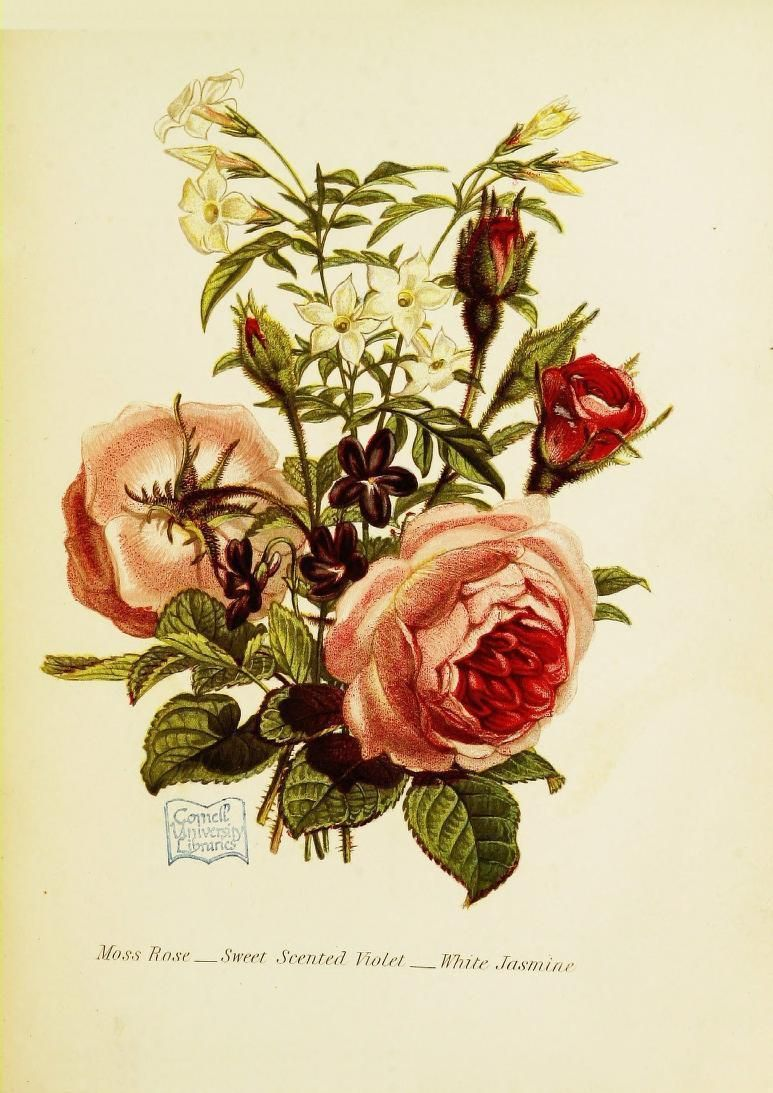 How Flower Obsessed Victorians Encoded Messages In Bouquets Language Of Flowers Flowers Photography Victorian Flowers