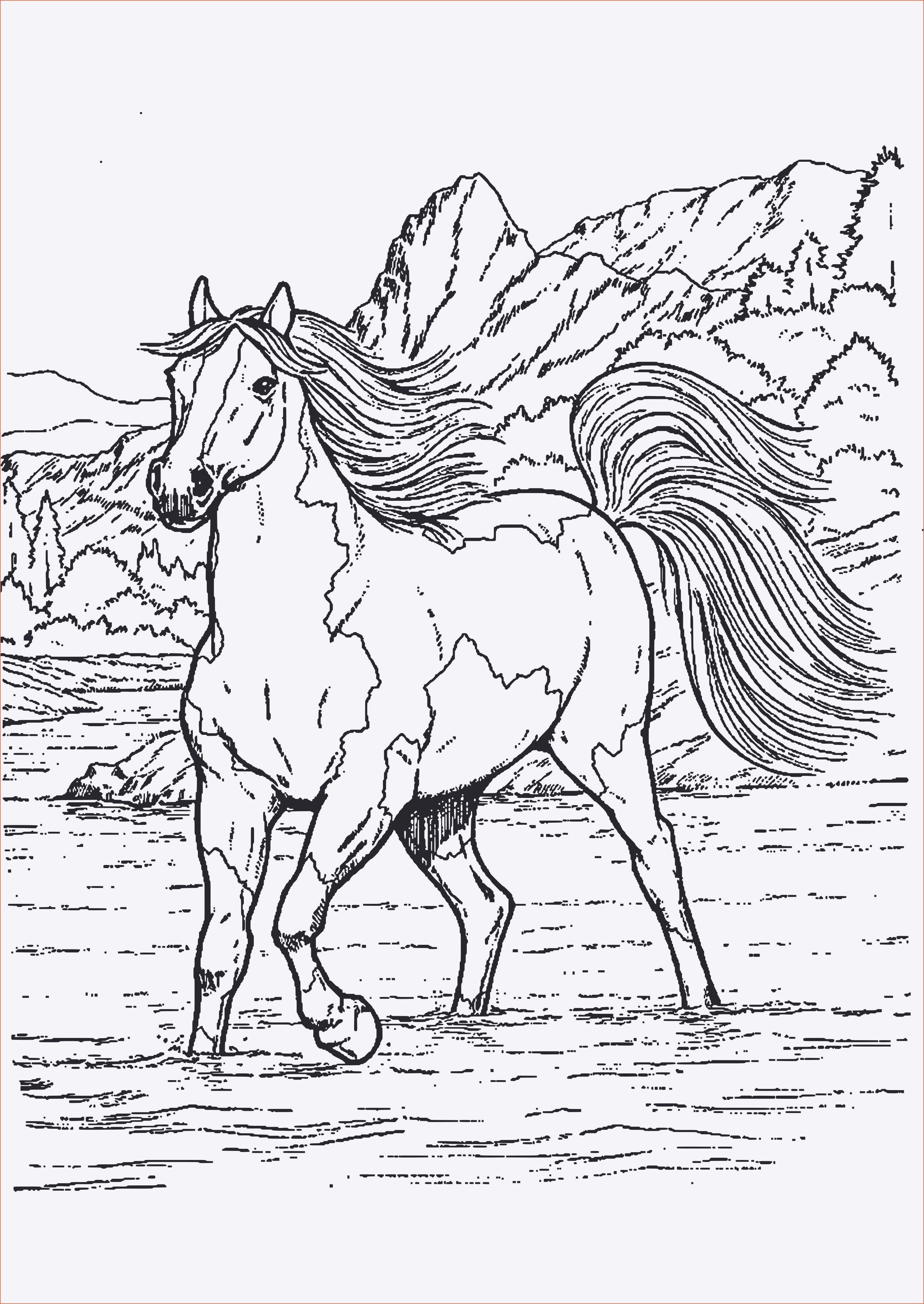 7 Genial Pferde Ausmalbilder Springen  Ausmalbilder pferde zum