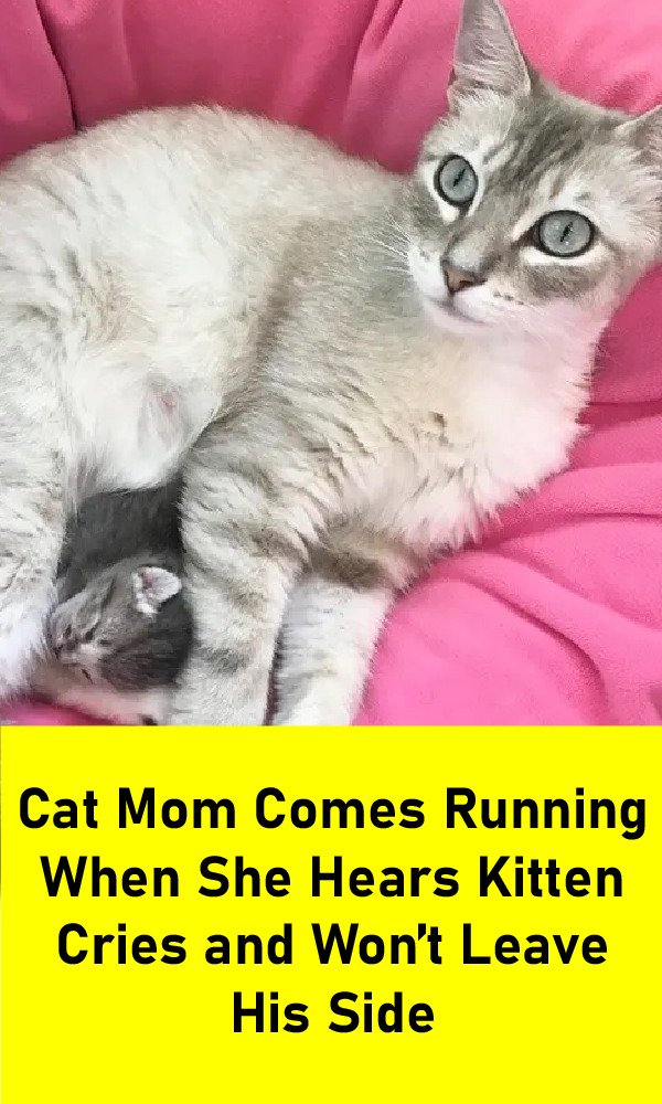 Pin On Cats Are Family Cats Kittens