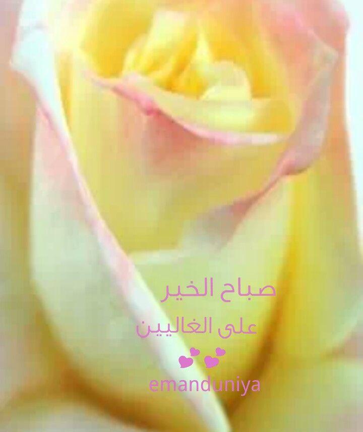 صباح الخير على الغاليين Flowers Good Morning Rose