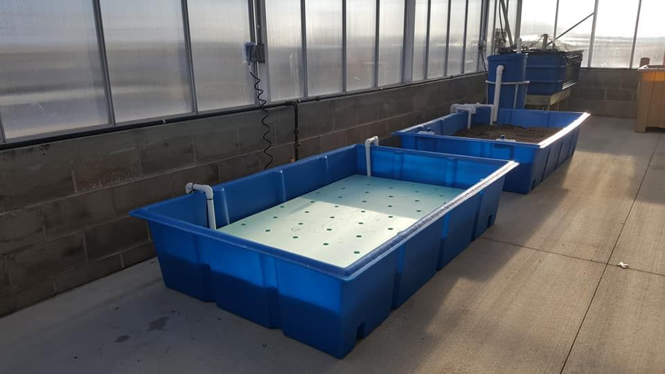 This System Has 2 Of Our Aquaponic Grow Beds 1 Used As A Raft