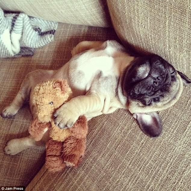 24 Animals Sleeping And Cuddling With Stuffed Animals Puppy