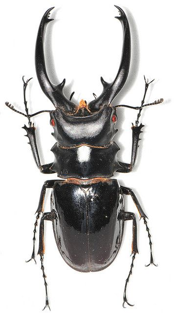 insect sample by Amherst Wu, via Flickr