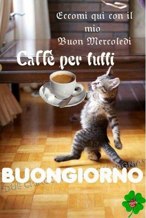 Pin di antonella su buongiorno funny animals for Buongiorno con gattini
