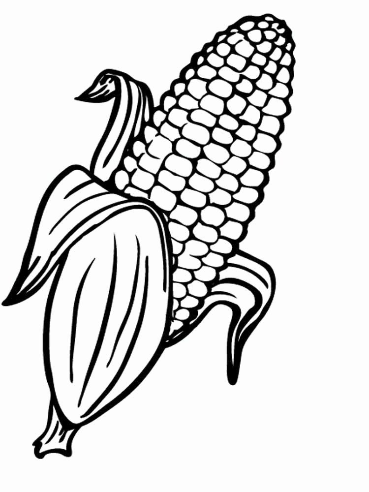 Corn On The Cob Coloring Page Elegant Corn Drawing At Getdrawings