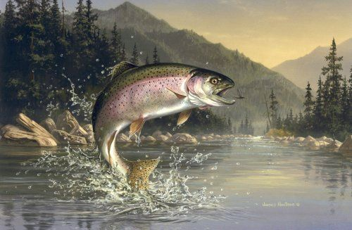 The Ultimate To Be At One With Nature Fly Fishing Art Trout Painting Trout Art