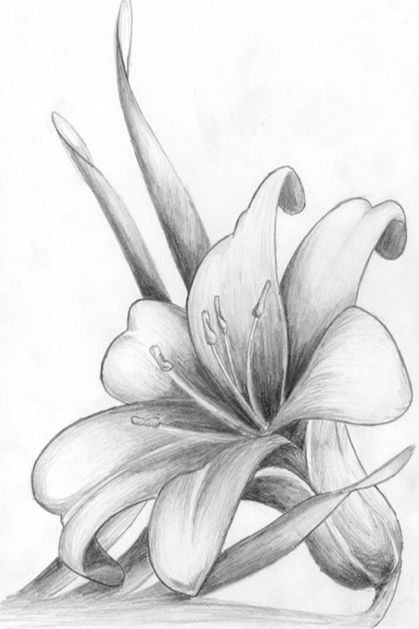 Easy Flower Pencil Drawings For Inspiration Pencil Drawings Of