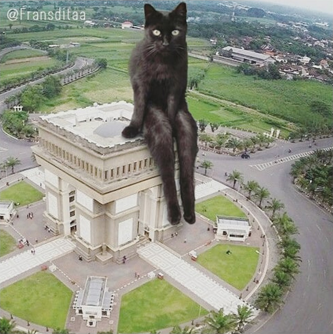 What If Giant Cats Lived Among Us? Giant cat, Cat has