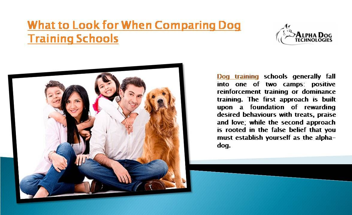 Dog Training Schools Generally Fall Into One Of Two Camps