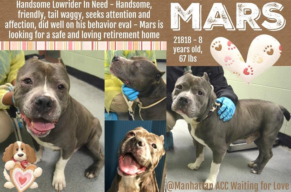 Image May Contain Dog And Text Waiting For Love Pets Pitt Bulls