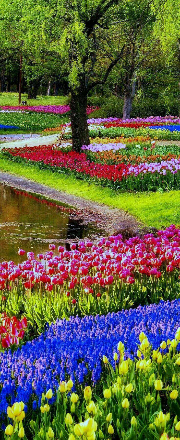 Holland's flower gardens Beautiful gardens, Most