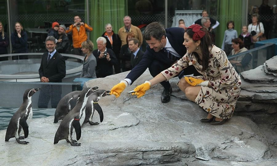 Say hello to their little friends! Frederik and Mary, who was expecting twins at the time, fed penguins in 2010 at the Ozeaneum maritime museum and aquarium in Stralsund, Germany.
