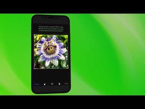PlantSnap is an easytouse plant identifier app brought
