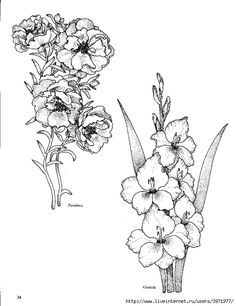 Image Result For Gladiolus Flower Outline Outline Art Flower Drawing Flower Outline