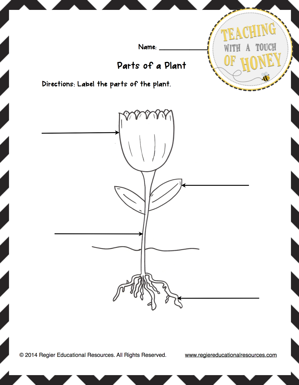 Parts Of A Plant Worksheet For First Grade Or Three Activity Sheets
