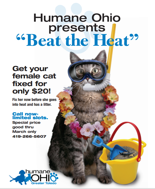 Beat The Heat Spay Poster Pet Event Animal Rescue Ideas Neuter
