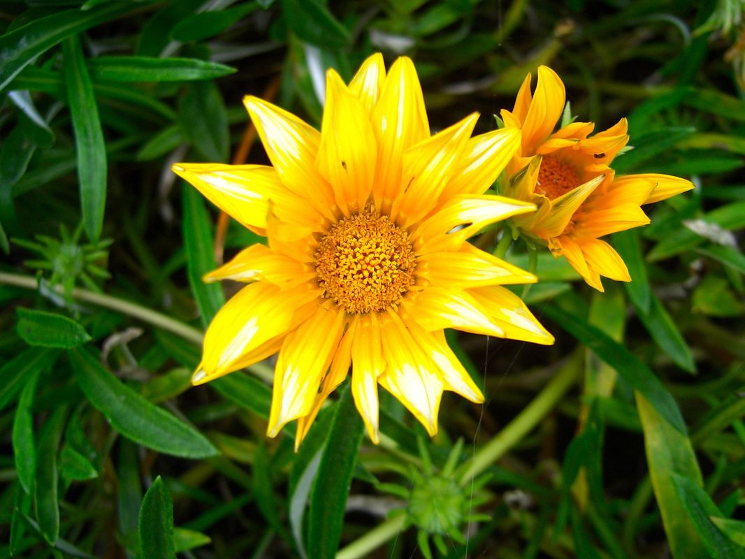 yellow flowers Nature photography flowers, nature and beauty flowers and insects