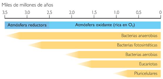 Cronologa de la vida en la tierra el origen de la vida y las cronologa de la vida en la tierra urtaz Choice Image
